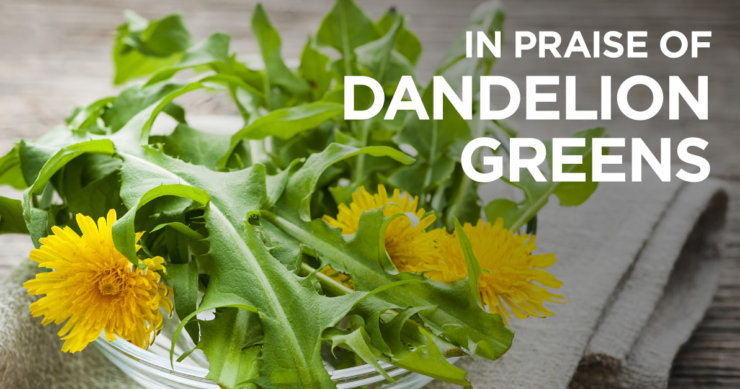 Why You Should Pick Dandelion Greens