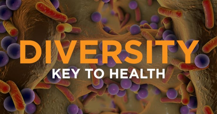 Healthy Gut Bacteria – Diversity is the Key