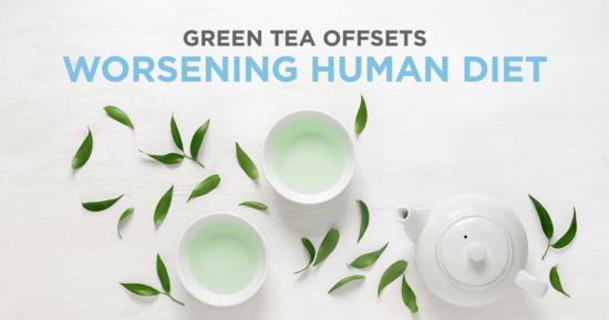 Green Tea Offsets Worsening Human Diet