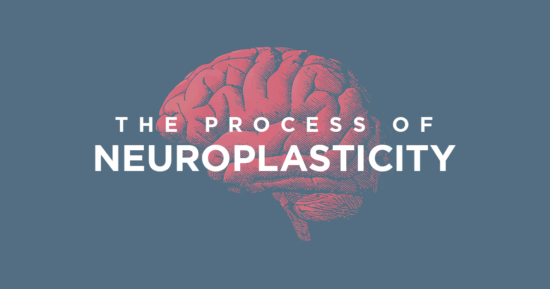 The Process of Neuroplasticity