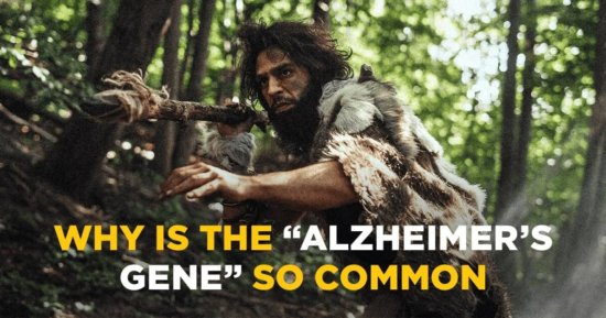 """Why is the """"Alzheimer's Gene"""" So Common?"""